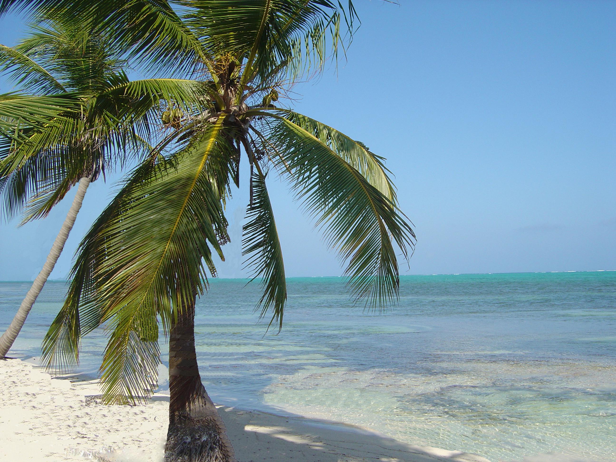 Costa Maya Oceanfront Lot In El Uvero