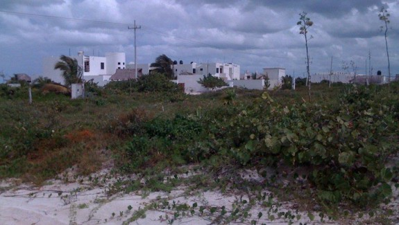 Beach lots in San Bruno Yucatan