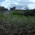 Beach lot in Chicxulub for sale in Yucatan