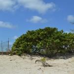 7 Beachfront home for sale in Yucatan Mexico