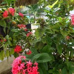 1Beach Home for sale Chicxulub Yucatan Mexico