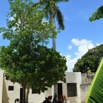 27 Two Houses for Sale in Meida Casa Two