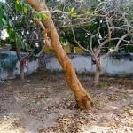 Unique home for sale in Merida Yucatan Mexico 15