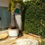 Merida Home for Sale near US Consulate 20