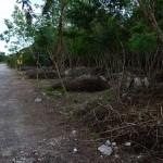 Lot for sale near Polo Club Merida Yucatan DSC_0112