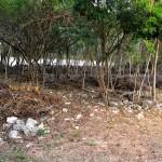 Lot for sale near Polo Club Merida Yucatan DSC_0118