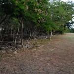 Lot for sale near Polo Club Merida Yucatan DSC_0119
