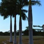 Lot for sale near Polo Club Merida Yucatan DSC_0133