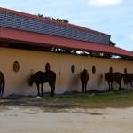 Lot for sale near Polo Club Merida Yucatan DSC_0134