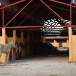 Lot for sale near Polo Club Merida Yucatan DSC_0136