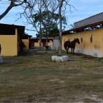 Lot for sale near Polo Club Merida Yucatan DSC_0138