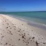 Beachfront property for sale in Yucatan Mexico IMG_4756