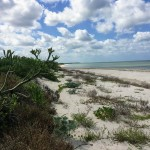 Beachfront land with plans in Sisal Yucatan 09