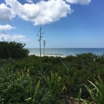 Beachfront land with plans in Sisal Yucatan 8761C902-EBD2-4450-9A29-170159EA0849