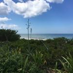 Beachfront land with plans in Sisal Yucatan 8761C902-EBD2-4450-9A29-170159EA0849