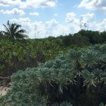 Beachfront land with plans in Sisal Yucatan EA1C7340-DEC9-4871-8850-A2FE00AFC2B4