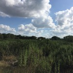 Country lot in North Merida for sale 1