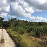 Country lot in North Merida for sale 2