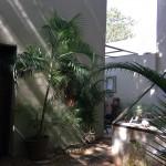 Colonial Mansion Merida Yucatan for sale IMG_1836 (1)