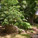 Santa Ana Mansion Merida Centro IMG_3539