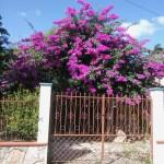 House for sale Izamal Yucatan IMG_20161105_101113