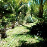 House for sale Izamal YucatanIMG_20190809_1304407_rewind