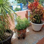 House for Sale Merida Yucatan IMG_20210728_114306